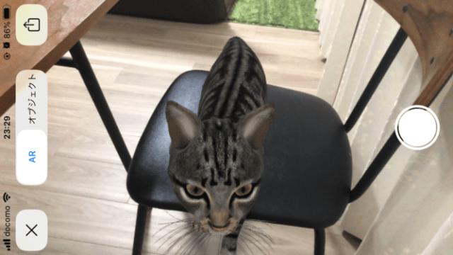 ARの猫を写真撮影する